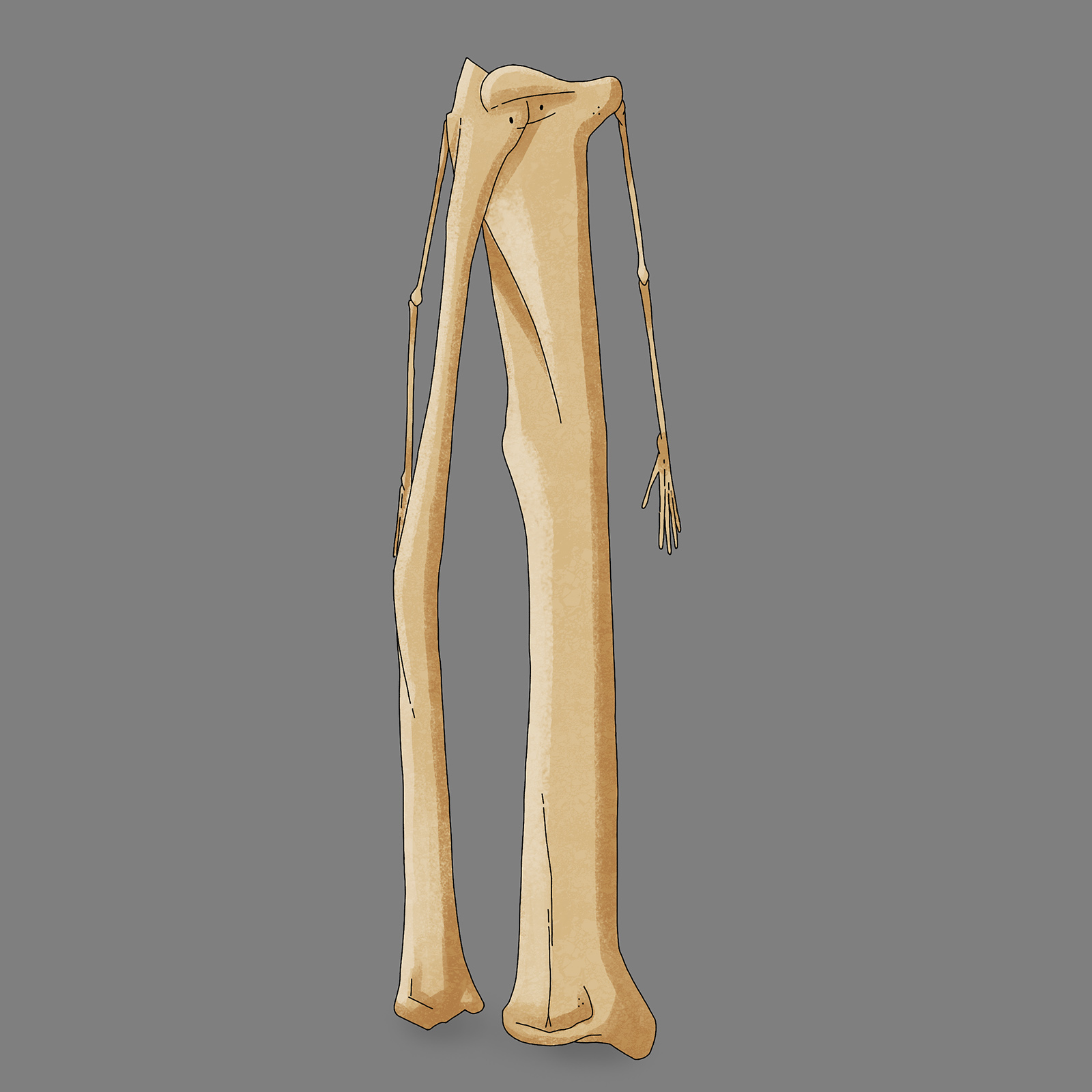 Character Design for Bone