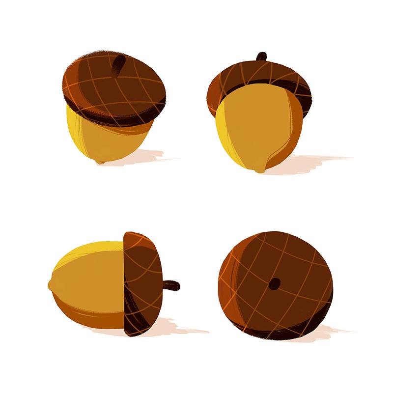 babw01 fall15 acorn dt