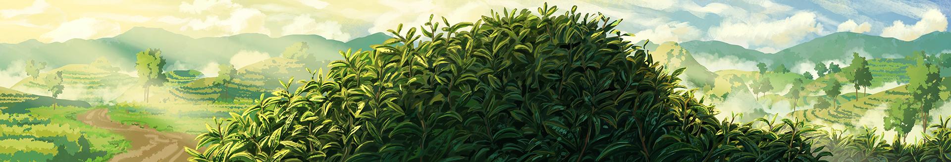 Go Go Tea: Landscape